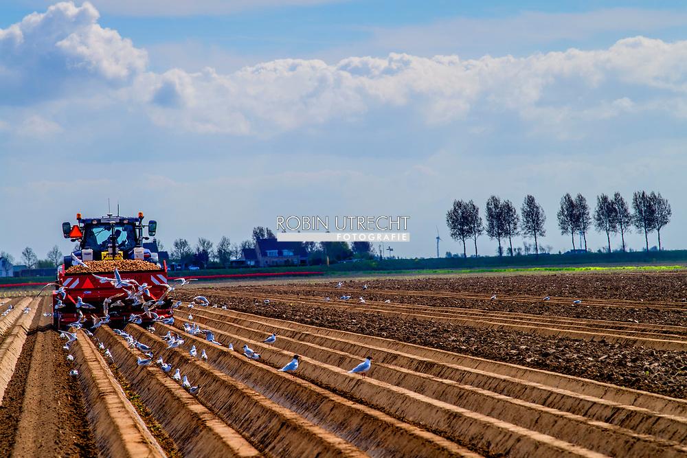 NIEUW TONGE - aardappels op het land boer tractor ,water , doogte , bewateren , watergeven , spoeier , velden , trouwerij , bruid , bruidegom bollenvelden staan in de bloei tijdens de lente bloembollen , bollenvelden , toeristen , toerist in , bloei , staan , Tourist between the flowerfields in the netherlands Drukte in de Bollenstreek. Er kwamen weer veel toeristen uit binnen- en buitenland naar de bollenvelden en Keukenhof.