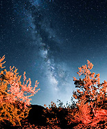 The Milky Way is seen above the Joshua Tree National Park in Twentynine Palms, California, August 18, 2017. (Photo by Ringo Chiu)<br /> <br /> Usage Notes: This content is intended for editorial use only. For other uses, additional clearances may be required.
