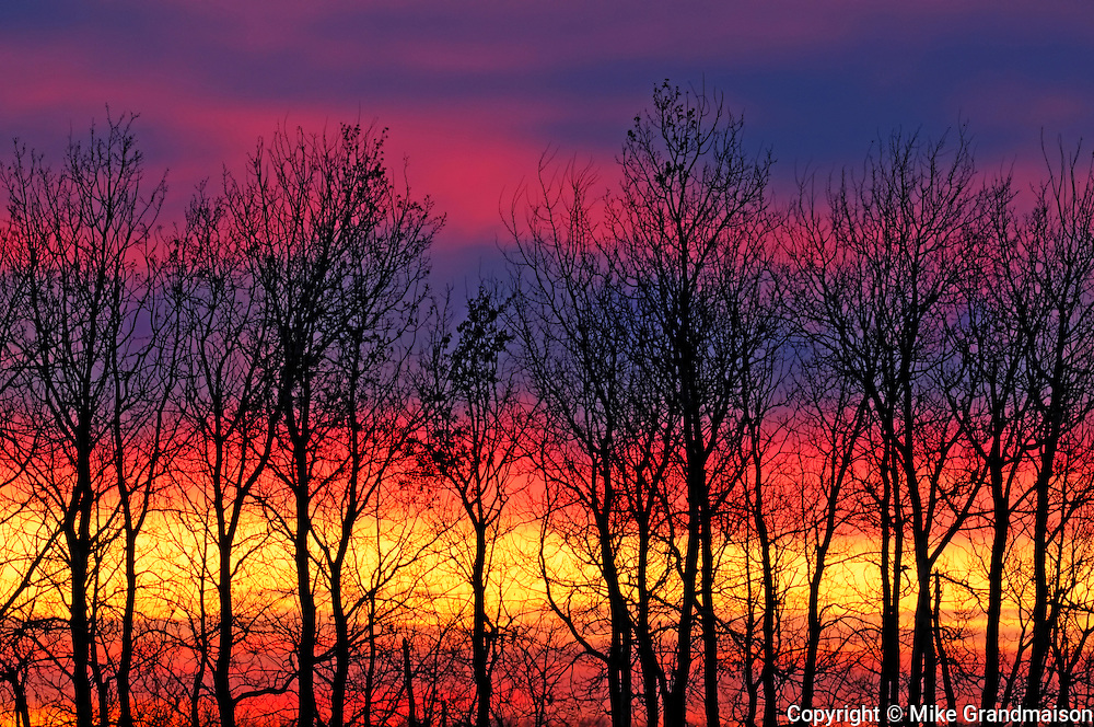 Trees and clouds at sunrise on shore of Lake Winnipeg<br />