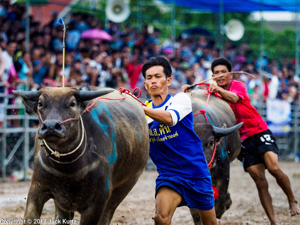 "04 OCTOBER 2017 - CHONBURI, CHONBURI, THAILAND: ""Jockeys"" get off their buffalo as they cross the finish line during buffalo races. Contestants race water buffalo about 100 meters down a muddy straight away. The buffalo races in Chonburi first took place in 1912 for Thai King Rama VI. Now the races have evolved into a festival that marks the end of Buddhist Lent and is held on the first full moon of the 11th lunar month (either October or November). Thousands of people come to Chonburi, about 90 minutes from Bangkok, for the races and carnival midway.   PHOTO BY JACK KURTZ"