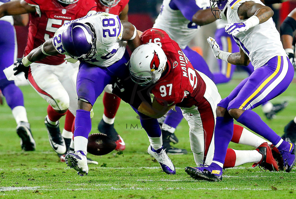 Minnesota Vikings running back Adrian Peterson (28) fumbles after being hit by Arizona Cardinals nose tackle Josh Mauro (97) during the second half of an NFL football game, Thursday, Dec. 10, 2015, in Glendale, Ariz. (AP Photo/Rick Scuteri)