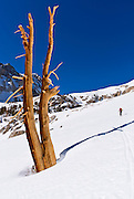 Backcountry skier climbing Piute Pass, John Muir Wilderness, Sierra Nevada Mountains, California USA