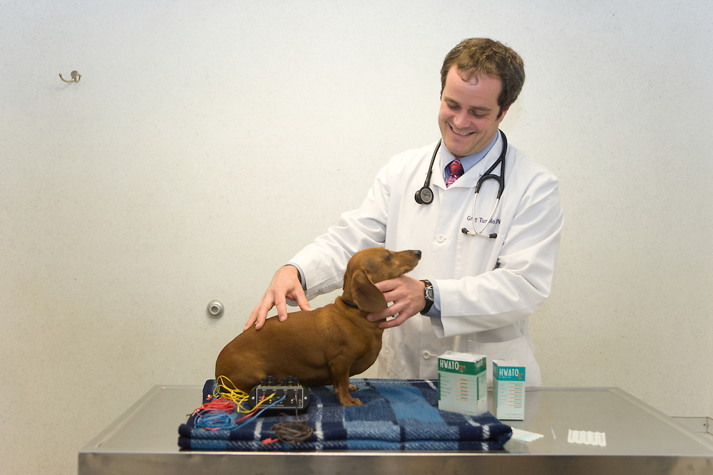 veterinarians and staff examining animals, routine examinatins, diagnosing problems,