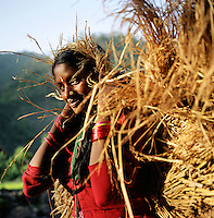 A woman works in the fields in a remote part of western Nepal controlled by Maoist rebels. (Photo/Scott Dalton)