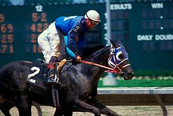 Stock photo of horses and jockeys racing the Sam Houston Race Park racetrack