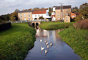 Swans on River Deben and Rackhams water mill, Wickham Market, Suffolk, England