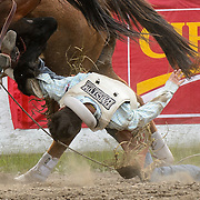 A cowboy competing in the bronco riding competition struggles to get his hand out of the handle and gets dragged by the horse at the Falkland Stampede.