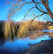 Willow Tree And Boathouse, Central Park, Manhattan