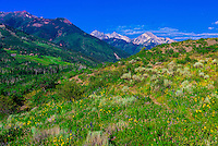 Rim Creek Trail, Snowmass Village (Aspen), Colorado USA.