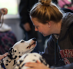 Therapy dogs invade PLU for midterm stress relief, Thursday, Oct. 20, 2016. (Photo: John Froschauer/PLU)