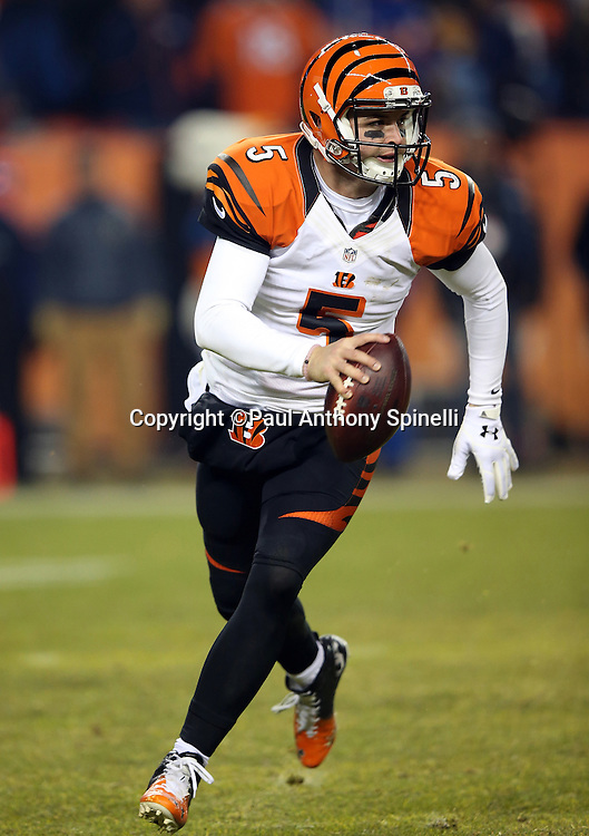 Cincinnati Bengals quarterback AJ McCarron (5) rolls to his right as he looks to pass in the fourth quarter during the 2015 NFL week 16 regular season football game against the Denver Broncos on Monday, Dec. 28, 2015 in Denver. The Broncos won the game in overtime 20-17. (©Paul Anthony Spinelli)