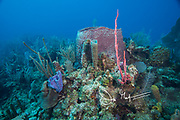 Colorful sponges on the seafloor, part of Belize's coral reef.