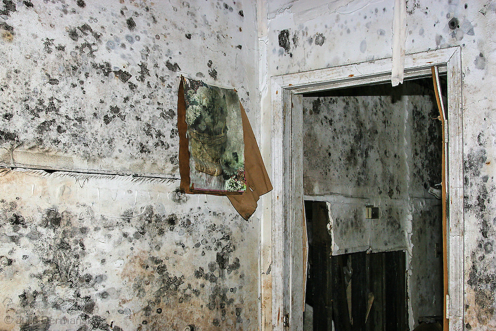 April 9, 2007,  Mold in a home destroyed by Hurricane Katrina in New Orleans.