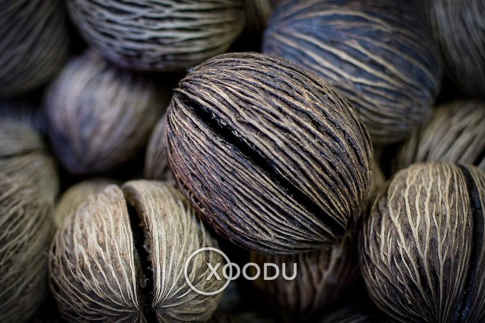 Macro closeup detail of small nut shell (Bangkok, Thailand - Oct. 2008) (Image ID: 081019-1800372a)