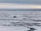 Arctic/Svalbard