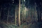 Dark forest of conifers with the silhouette of a man.<br />