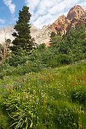 Wildflowers adorn the slopes below Piute Pass, Inyo National Forest, CA
