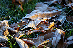 © Licensed to London News Pictures. 29/11/2016. London, UK. Frosty leaves are seen in Hyde Park, London on a frosty morning as temperatures in the capital drop as low as -3C on Tuesday, 29 November 2016. Photo credit: Tolga Akmen/LNP
