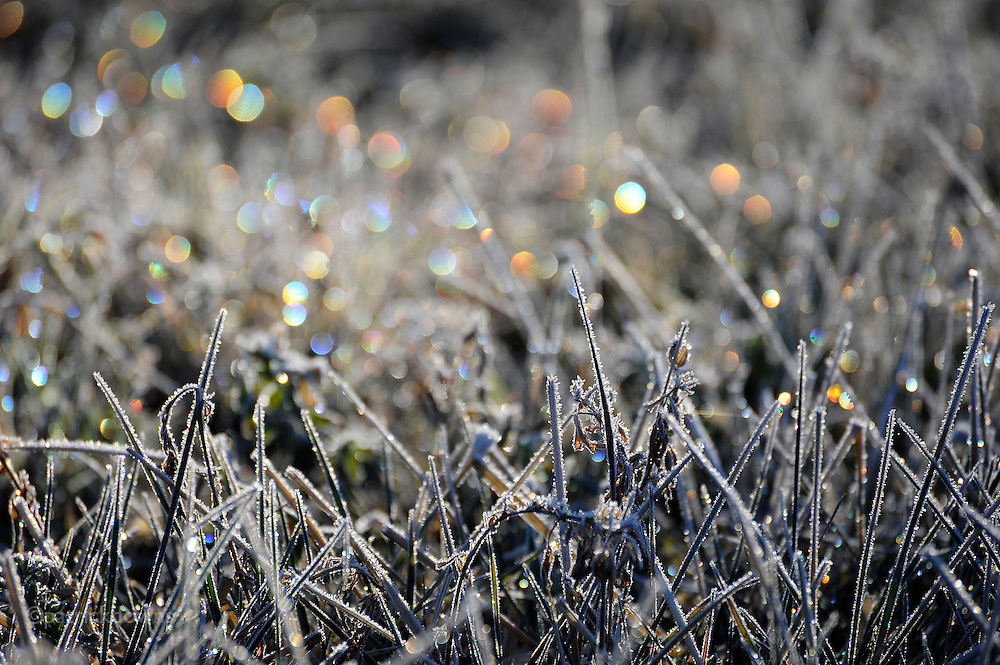A hard frost turns a mowed hay field into a carpet of jewels on a winter morning. Sequim, WA