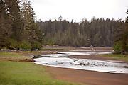 Coastal Brown Bear, Ocean raft and 4x4 Adventure tour, Kruzof Island, Sitka, Alaska