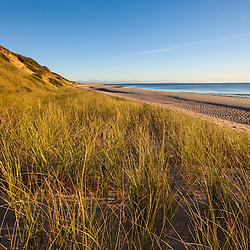 Dune grasses along the Great Island Trail, Wellfleet, Massachusetts. Cape Cod National Seashore.
