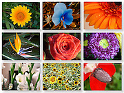 9 image collage of flowers