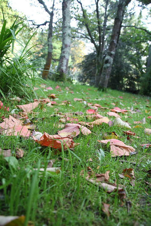 Autumn leaves on forest floor in Wicklow Ireland