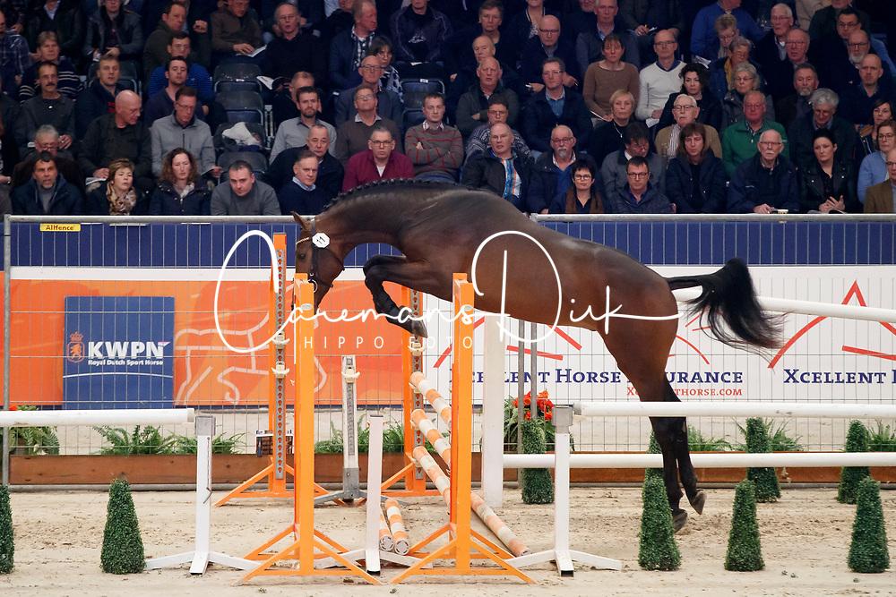 011, Kentucky VDL<br /> KWPN Stallionshow - 's Hertogenbosch 2018<br /> © Hippo Foto - Dirk Caremans<br /> 01/02/2018
