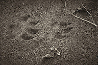 Animal Tracks near Pico Creek, San Simeon, Central California Coast. Image taken with a Nikon D3s and 50 mm f/1.4G lens (ISO 800, 50 mm, f/5.6, 1/250 sec).