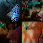 Parrot fish sleep in coral holes with eye open at night. Seeing the colours as your lights hit them is wonderful.