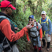 A guide explains some of the local flora to hikers climbing Mt Kilimanjaro at the top of the forest zone.