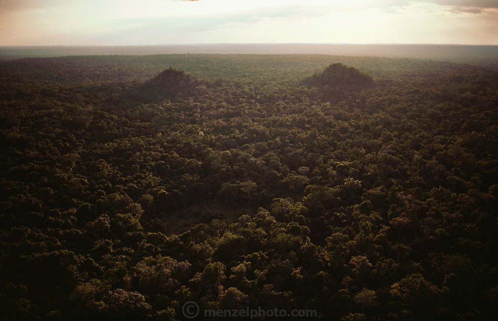 Aerial of the ancient Mayan city of Calakmul Yucatan, Mexico.  The two large pyramids are covered with trees and vegetation. 1984.