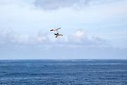Person flying microlight plane over the ocean, Caleta de Caballo, Lanzarote, Canary islands, Spain
