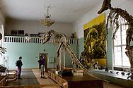 Mongolia. Ulaanbaatar. Natural history museum, dinosaurs room  Oulan Bator  Mongolia