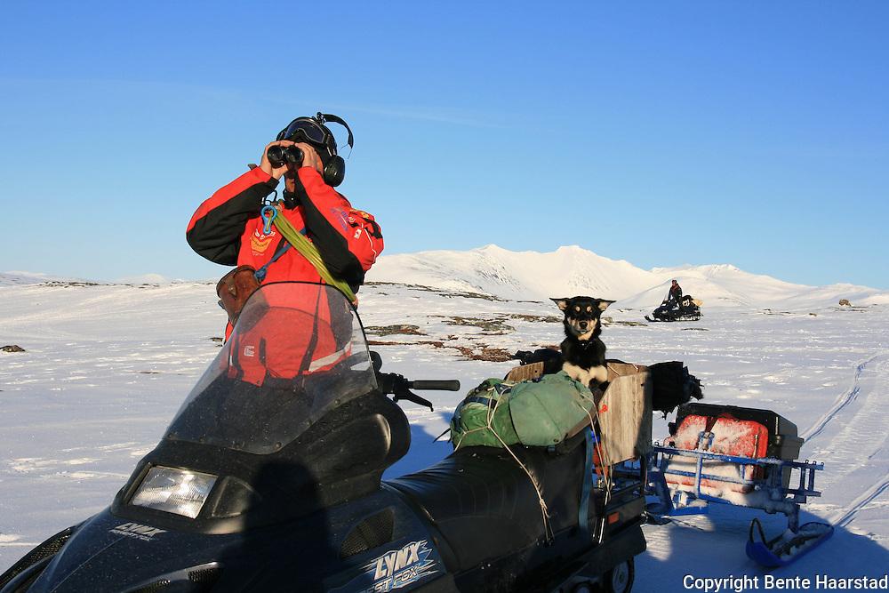 Vårflytting Essand reinbeitedistrikt. Dan Lennart Bendiksen har med gjeterhunden på passasjerplass på skuteren. Sylene i bakgrunnen.