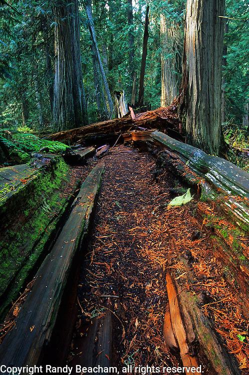 Ross Creek Cedars in the Cabinet Mountains. Kootenai National Forest, Montana