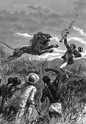 David Livingstone (1813-1873) Scottish missionary and African explorer. Livingstone being charged by a lion. Saved by Mebalwe, a native schoolmaster, who shot the animal. From 'Heroes of Britain' Edwin Hodder (London c1860). Wood engraving.