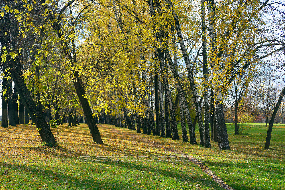 Fall in Moscow park.