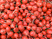 close up of a stack of organic radish