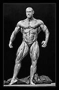 Various professional Body Builders at UK Shows..Harold Marillier .