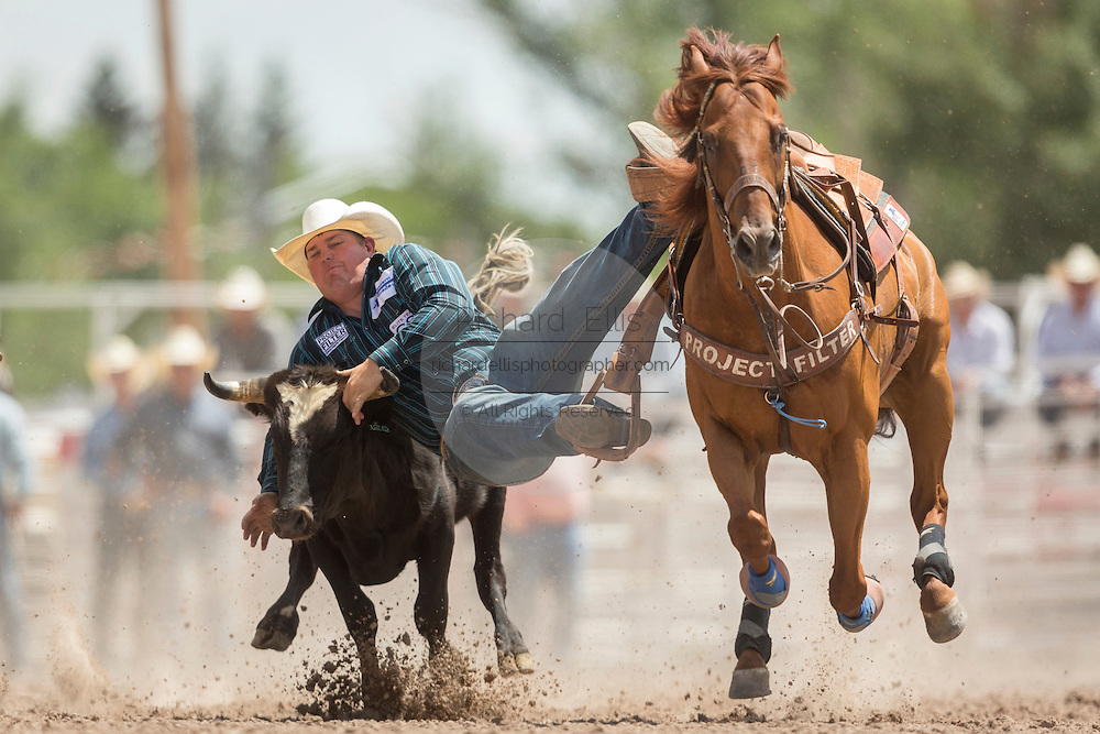 Steer Wrestler Wyatt Smith of Rexburg, Idaho grabs the horns of a steer at the Cheyenne Frontier Days rodeo at Frontier Park Arena July 24, 2015 in Cheyenne, Wyoming. Frontier Days celebrates the cowboy traditions of the west with a rodeo, parade and fair.
