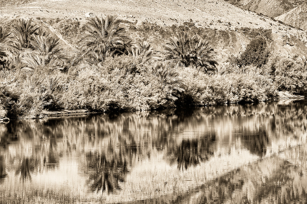 Palm reflections in the Draa river in the Draa valley, Morocco.