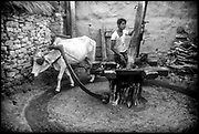 India.<br />Cattle powered grinding mill.