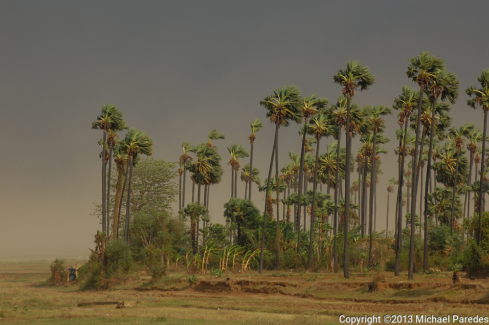 Palm trees along the Irrawaddy (Ayeyarwady) River, Burma (Myanmar) sway in heavy winds as a thunderstorm approaches