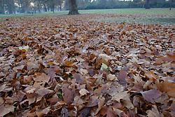 UK ENGLAND LONDON 27NOV03 - Hyde Park at dusk...jre/Photo by Jiri Rezac..© Jiri Rezac 2003..Contact: +44 (0) 7050 110 417.Mobile:  +44 (0) 7801 337 683.Office:  +44 (0) 20 8968 9635..Email:   jiri@jirirezac.com.Web:     www.jirirezac.com