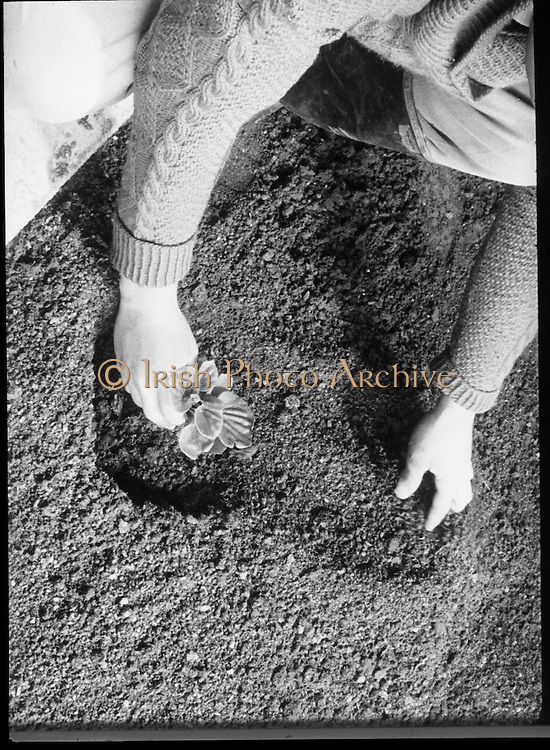 Bord Na Mona..1971..10.02.1971..02.10.1971..10th February 1971..Four images copied from Bord Na Mona Film..Image of gardener planting in a plot enriched with Bord Na Mona products.
