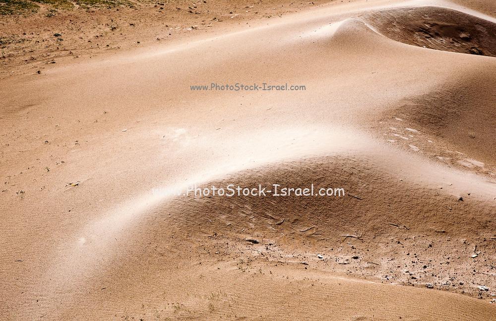 Israel, coastal plains, wind sculptured Sand Dune