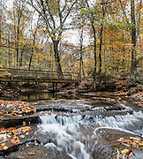 See lush rhododendron groves and fall foliage colors along Jonathan Run stream on the Kentuck Trail, near Kentuck Campground, in Ohiopyle State Park, Pennsylvania, USA. Visit Ohiopyle State Park for peak fall colors starting in late October, in Fayette County. Ohiopyle's Kentuck Campground is just 17 minutes from Fallingwater, the famous Kaufmann Residence designed by Frank Lloyd Wright. Ohiopyle SP is bisected by Pennsylvania Route 381, about 90 minutes southeast of Pittsburgh via car. The panorama was stitched from 3 overlapping photos.