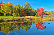 A red maple tree (Acer rubrum) in autumn color reflected in St. Poithier Lake<br />