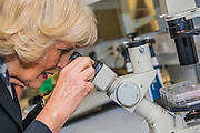 Her Royal Highness in the lab with researchers and looking at specemins through a microscope. The Duchess of Cornwall, Patron, Arthritis Research UK, visits and meets patients of the Adolescent Inpatient Unit at University College London Hospitals.  •	Her Royal Highness then tours a laboratory at the Arthritis Research UK Centre for Adolescent Rheumatology and meeting researchers and supporters. London 12 Feb 2015.